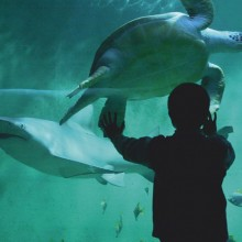 grand-aquarium